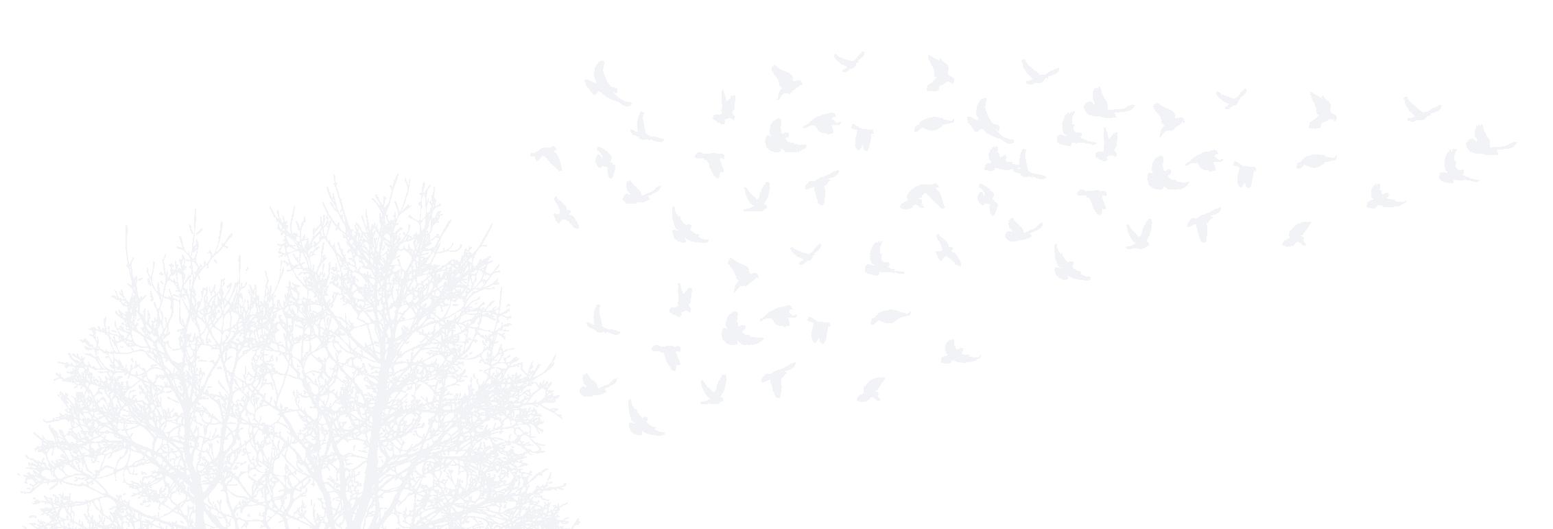 Birds flying over tree
